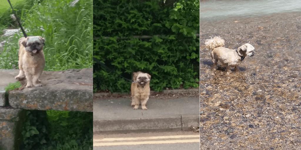 Indie enjoying his walks - My blogging life definitely includes dog walking time.